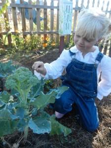 Closely examining fresh broccoli
